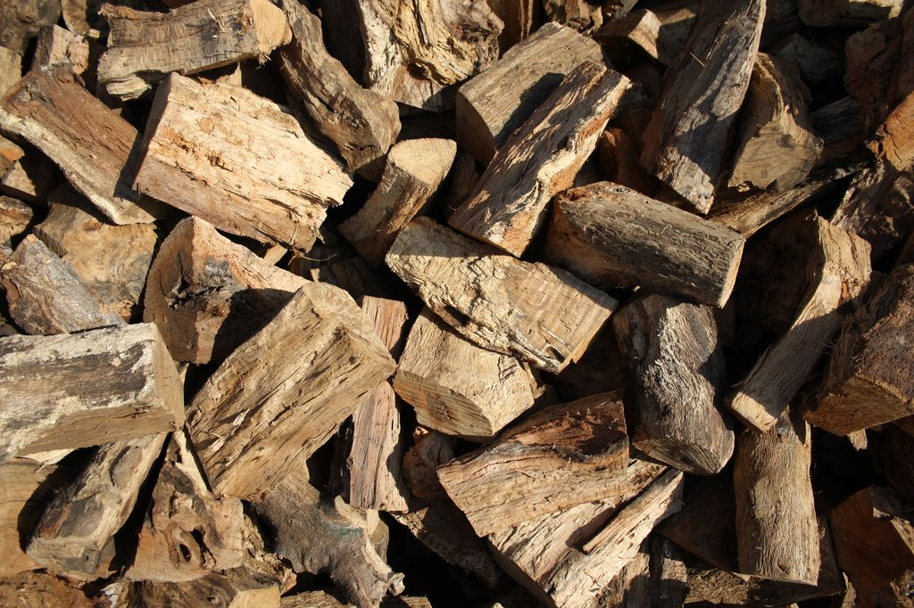 Cork oak - firewood